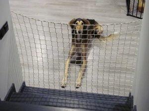 Siatka na schody dla psa