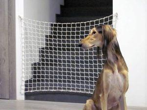 Siatka na schody pies